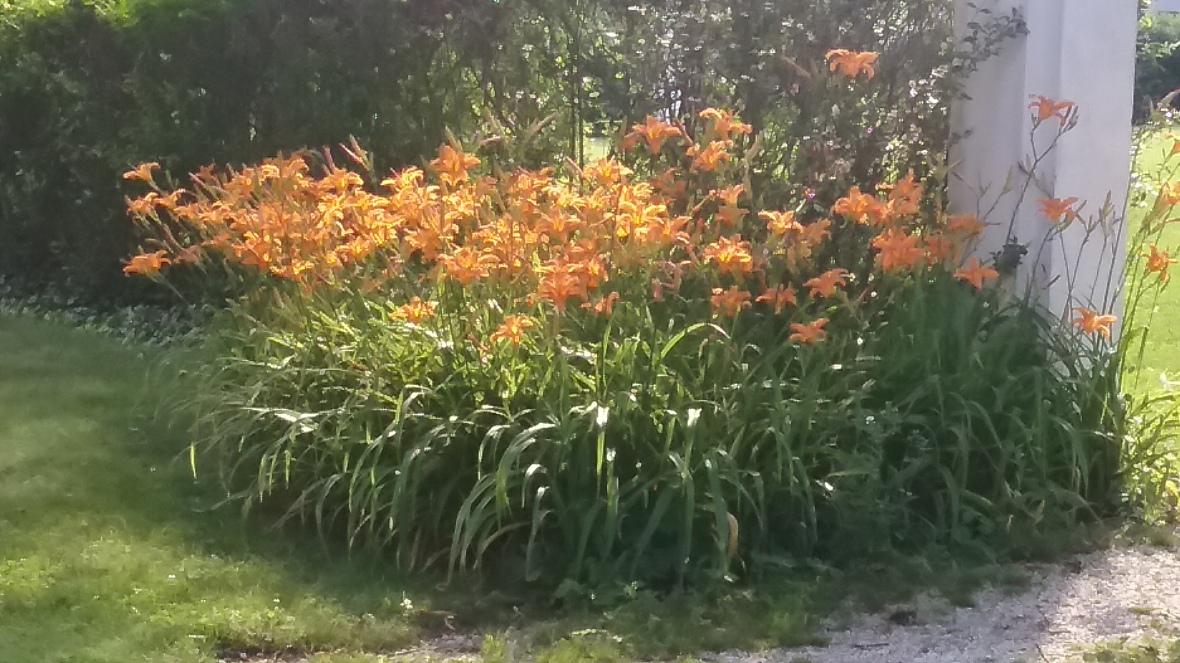 tiger-lilies-paulette-ryan
